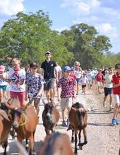 Descente des chèvres à la pâture -Ferme Borei d'Imbert -Roca  web