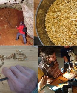 Ateliers et Conférence : Safari Paléontologique