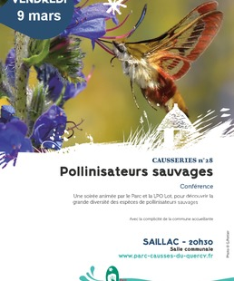Conférence : Pollinisateurs sauvages