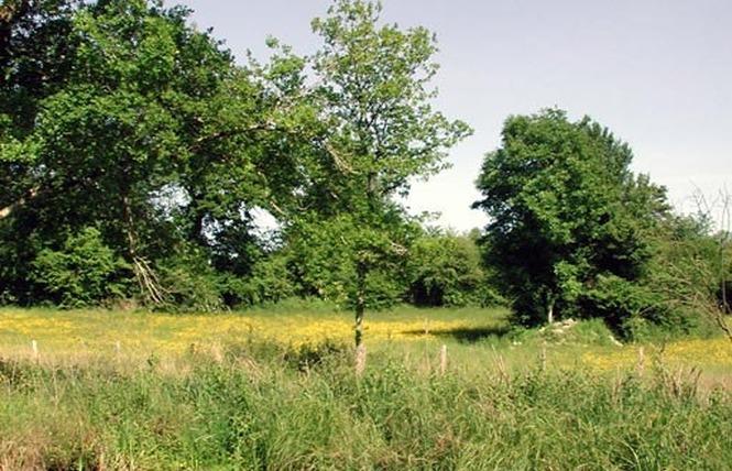 Réserve Naturelle Régionale du Marais de Bonnefont 4 - Mayrinhac-Lentour