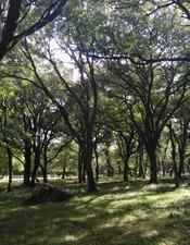 Les vieux arbres du Château de La Pannonie / Visite guidée