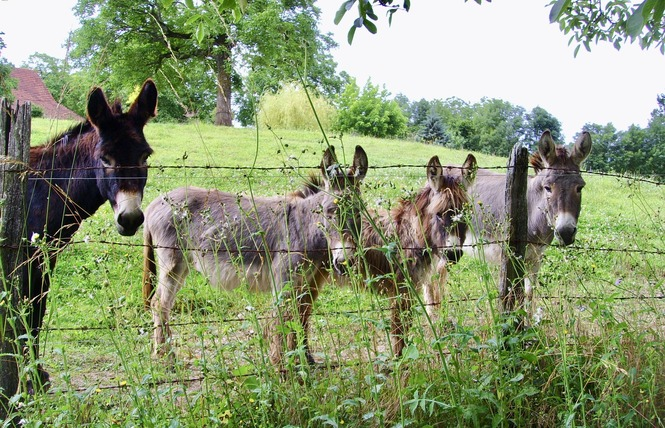 Gîte du Vigneron au Pays de Padirac 8 - Mayrinhac-Lentour