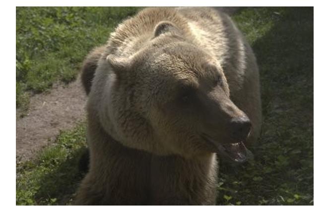 Parc Animalier de Gramat 21 - Gramat