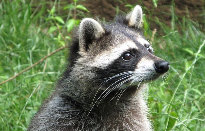 Parc Animalier de Gramat 3 - Gramat
