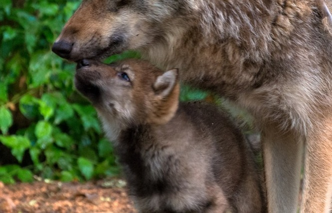Parc Animalier de Gramat 12 - Gramat