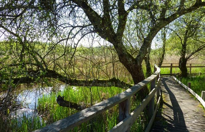 Le Marais de Bonnefont, Réserve Naturelle Régionale 5 - Mayrinhac-Lentour
