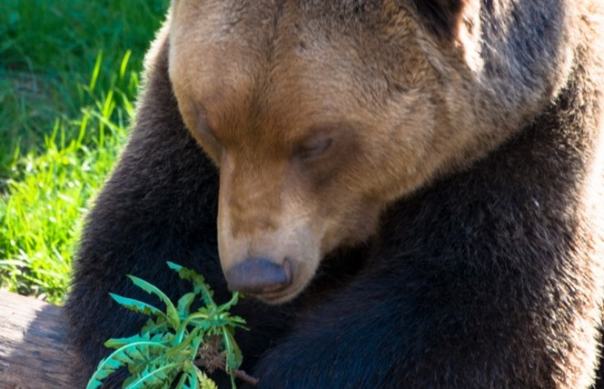 Parc Animalier de Gramat 17 - Gramat