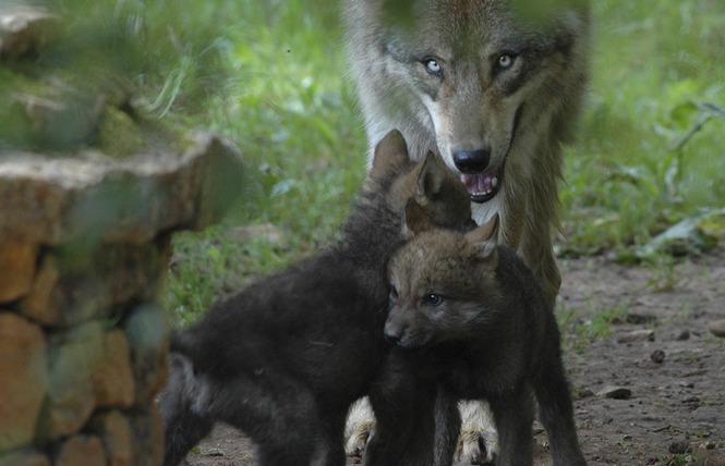 Parc Animalier de Gramat 20 - Gramat